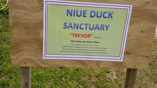 Cáo phó về con vịt trên trang Facebook của đảo Niue.