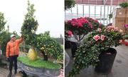 Cây dáng công hút khách dù hoa Tết ế ẩm