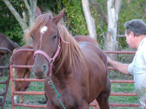 Christopher Langan rất yêu thích việc chăm sóc ngựa và ông đang sở hữu một trang trại ngựa.