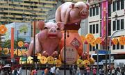 Người Hồi giáo không ưa con heo nhưng vẫn vui Tết lợn