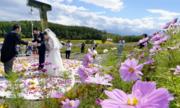 Ngày càng nhiều người Nhật chuẩn bị cho ly hôn từ lúc sắp cưới