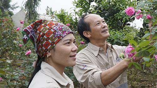 Ngoài nuôi heo, anh Thục và chị Hiền còn trồng thêm hoa hồng, bưởi để lấy tinh dầu. Ảnh: Trọng Nghĩa.