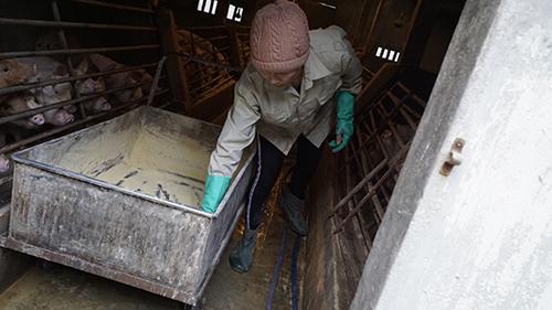 Thảo mộc được xay thành dạng bột để heo có thể ăn và hấp thụ tốt nhất. Ảnh: Trọng Nghĩa.