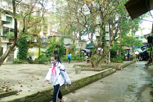 Sân giữa hai toà nhà tập thể rộng rãi, trồng nhiều cay xanh và từng là nơi đặt các sà đơn, khuyến khích người dân tập thể dục. Ảnh: P.D.