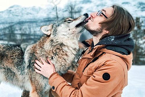 Cặp vợ chồng ôm hôn sói hoang kỷ niệm ngày cưới - 1