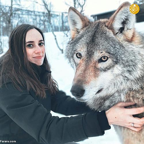 Cặp vợ chồng ôm hôn sói hoang kỷ niệm ngày cưới - 2