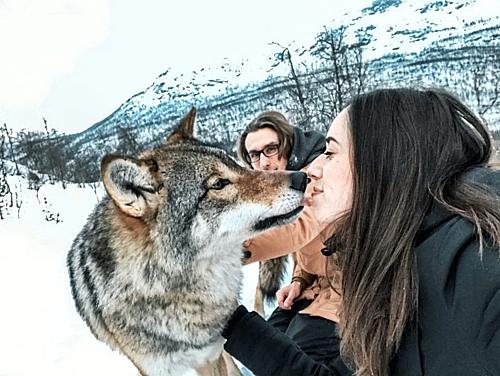 Cặp vợ chồng ôm hôn sói hoang kỷ niệm ngày cưới