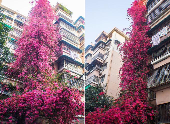 'Thác' hoa rực rỡ cao 30 mét trong chung cư cũ