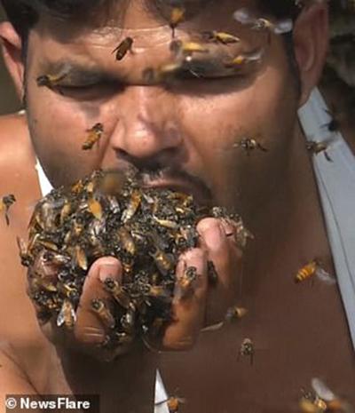 Cất ong vào miệng để chúng khỏi bay mất là cách làm thường ngày của Mohammad trong công việc nuôi ong mật. Ảnh: Newsflare.