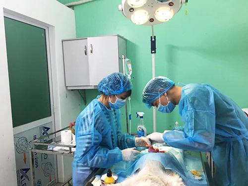 Để thực hiện được một ca phẫu thuật chó mèo, bác sĩ thú y cũng phải sử dụng những thiết bị hiện đại. Ảnh: Trà My.