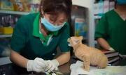 Bi hài sự cố nghề nghiệp khi bác sĩ chữa bệnh cho thú cưng