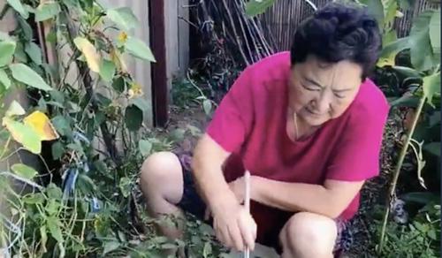 Bà Li cẩn thận chăm sóc vườn rau. Ảnh: SCMP.
