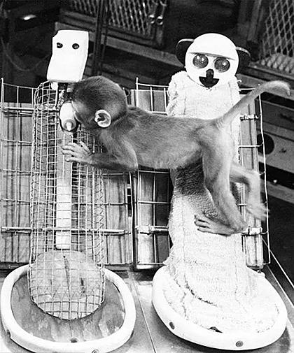 Chú khỉ bám mẹ lông mềm, vắt mình sang mẹ sắt bú.
