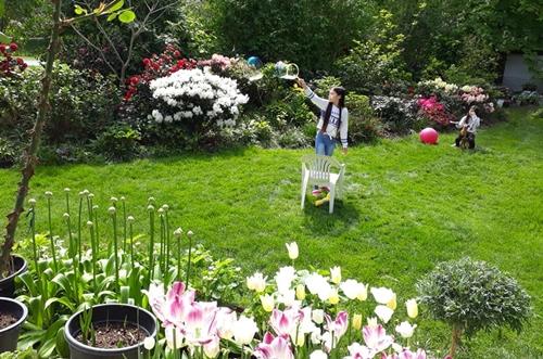 Để có thảm cỏ xanh đẹp, vợ chồng mình phải rải đạm 2 lần/năm vào mùa xuân và thu. Hè nắng nóng ít mưa, mình toàn phải để máy tự tưới bởi nắng to là cỏ sẽ khô hết.