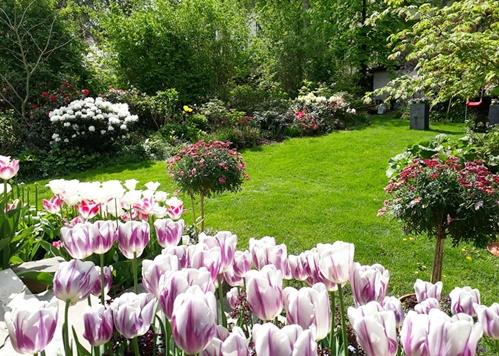 Khu vườn rộng 500 m2