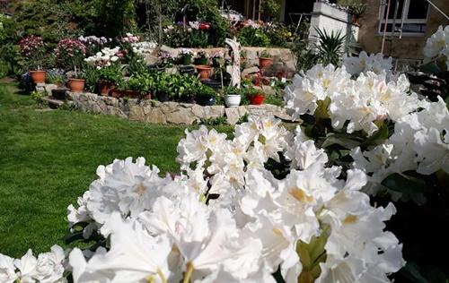 Chia sẻ về cách chăm sóc khu vườn, chị Trang cho biết, chị thường tự làm đất như lấy cỏ, cành lá, cây, rau củ quả, vỏ trứng, chè, café,... đổ vào thùng rác vườn, sau 1-2 năm dùng chúng làm đất bón cho cây.