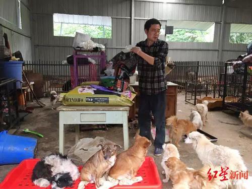 Zhang chăm sóc những chó chó. Ảnh: Shanghaist.