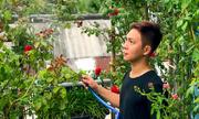 Chàng trai làm vườn hồng đủ màu trên ban công tặng cha mẹ