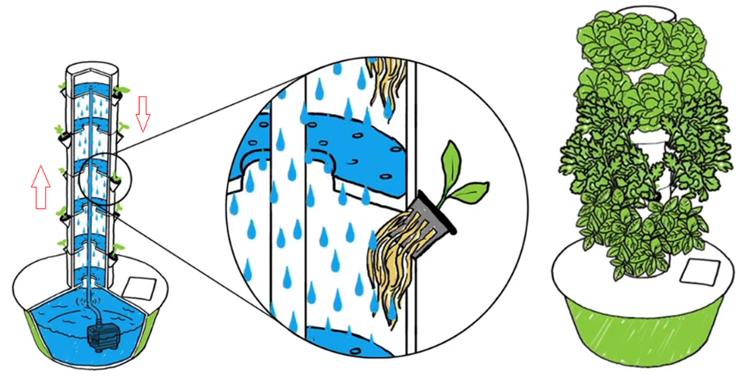 Trong trụ khí canh, nước dinh dưỡng được dẫn lên cao, phun dạnghơi sương xuống dưới, cung cấp dinh dưỡng cho rễ cây, nuôi cây lớn nhanh.