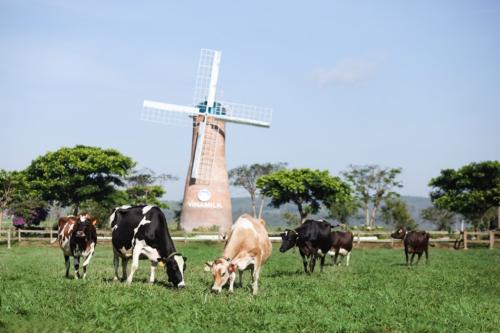 Bạn đã hiểu đúng sữa tươi Organic chưa? (bài xin edit) - 1