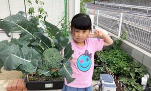 Vườn rau giúp gia đình Việt kết giao được nhiều hàng xóm Nhật