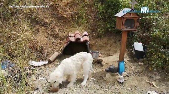 Không đưa được chú chó về, người dân địa phương đành dựng lều và mang thức ăn tới cho nó. Ảnh: Nafpaktos News.
