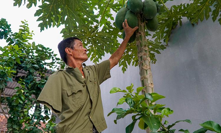Vườn cây ăn quả trong ngôi nhà mới cũng một tay ông Quyết ươm trồng. Ảnh: Trọng Nghĩa.