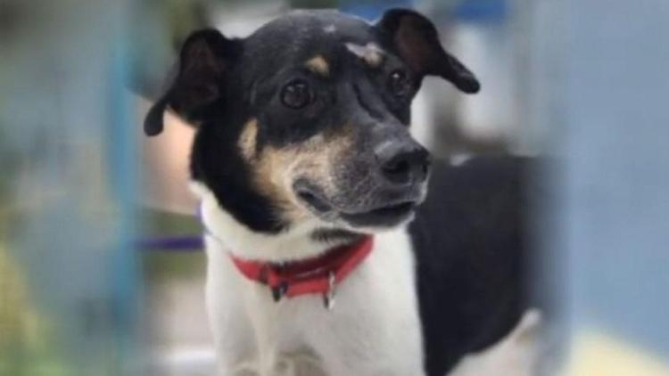 Chú chó Zippy đã chết sau khi cứu cả gia đình chủ khỏi đám cháy. Ảnh: Fox13.