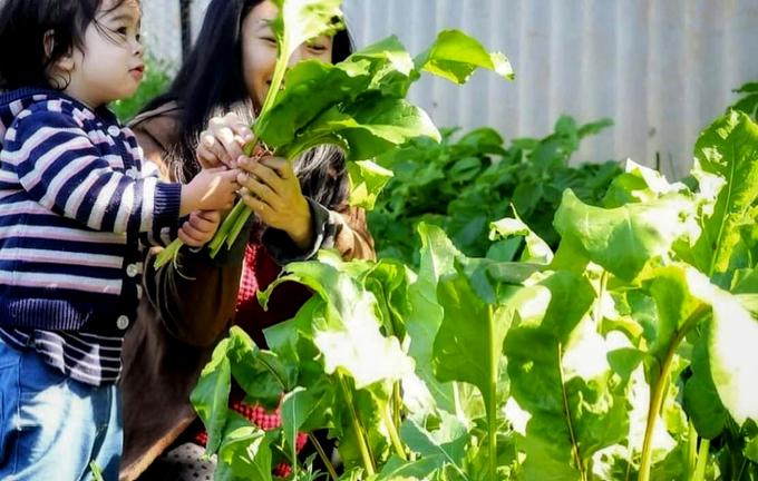 Rau 'khổng lồ' trong khu vườn Việt ở Australia