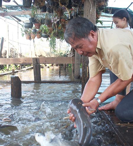 Tôi thích nhất lúc cho ăn đượcsờ đầu cá, cầm nó lên rồi để nó tuột khỏi tay mình, ông Phạm Văn Cường bảo. Ảnh: Phan Diệp.