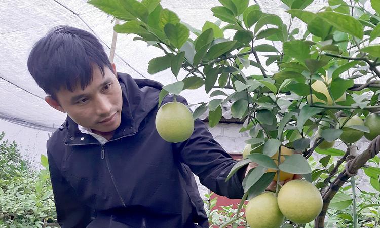 Anh Hà cho biết, nếu buôn bán, anh vẫn sẽ có thể làm giàu, nhưng để làm chủ bền vững, trồng chanh trên mảnh đất quê hươnglà lựa chọn đúng đắn. Ảnh: Phạm Nga.