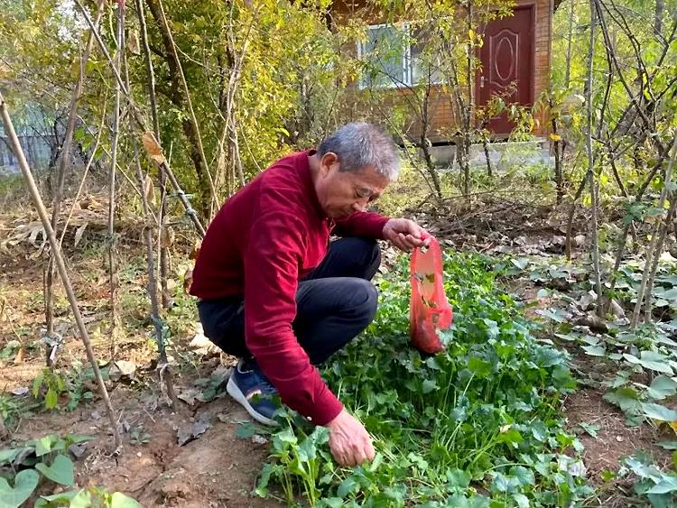 Ông Hoàng chăm vườn rau sau nhà để có rau sach cho vợ con. Ảnh: bjnews.