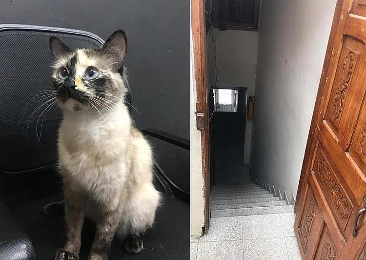 Con mèo đã cứu em bé và bậc cầu thang dốc đứng, nơi em bé thoát chết. Ảnh: Asiaone.