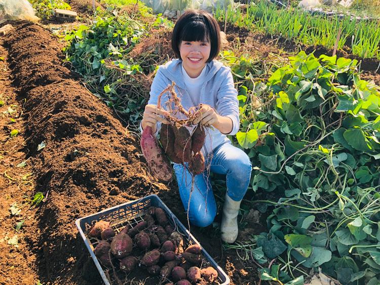 Hôm 10/11, chịThuận thu hoạch khoai để dọn vườn, trồng lại sau trận bãoHagibis phá hoại hầu hết rau màu. Ảnh: Mochizuki.