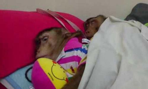 Chúng ngủ như những cặp vợ chồng người bình thường. Ảnh: Dailystar.