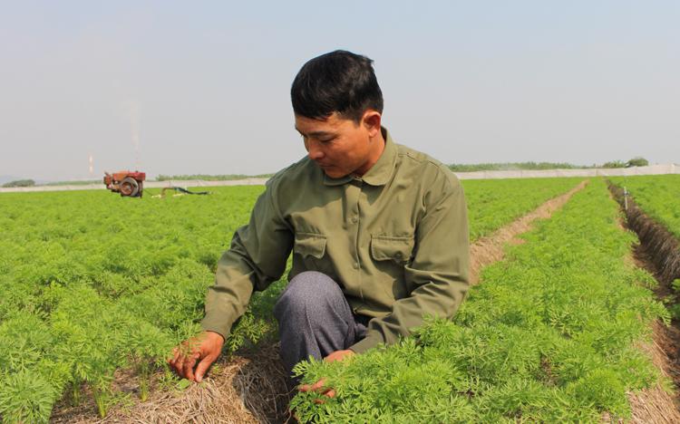Làm chủ, có thu nhập khoảng 5 tỷ đồng mỗi năm, nhưng anh Linh luôn sát sao bên các ruộng rau củ như mọi công nhân khác. của hợp tác xã. Ảnh: Phạm Nga.