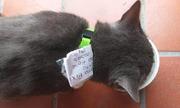 Gia đình phát hiện con mèo sống 'hai mặt'