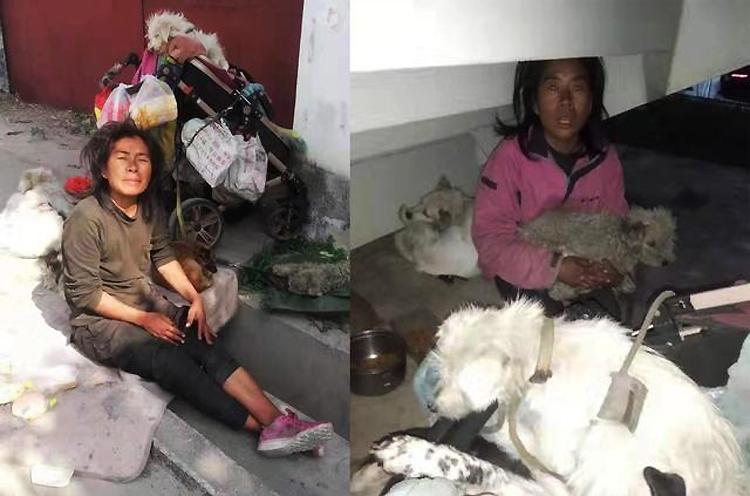 Xiaomei sống cảnh lang thang bên đàn chó của mình. Ảnh: Sina.