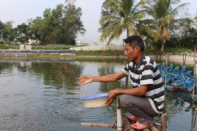 Hiện gia đình anh Huy có 5 ao nuôi tôm thẻ chân trắngvà một ao cá, tổng diện tích 3.500 m2. Ảnh: Phạm Nga.