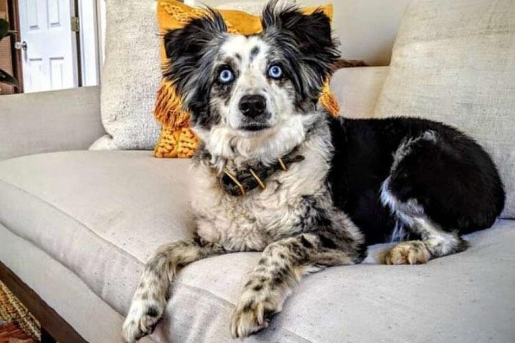 Chú chó Jackson hiện đang mất tích của Emilie Talermo. Ảnh:Emilie Talermo.