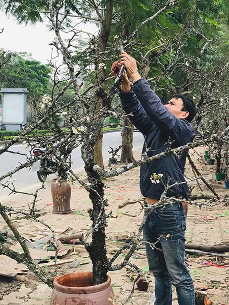 Một người bán trên đường Lạc Long Quân tỉa cành để tạo thế đẹp cho cành hoa lê rừng. Ảnh: Hải Hiền.