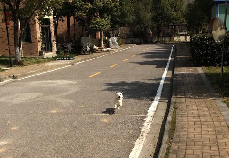 Chú chó của Đại Dung chạy ra đón chủ sau 2 tháng xa nhà. Ảnh: sohu.
