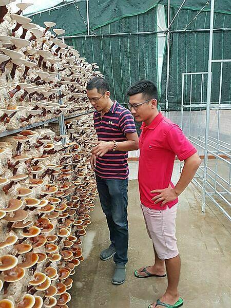 Nguyễn Anh Võ (áo đỏ) cùng cộng sự Trần Duy Khánh kiểm tra trang trại nấm linh chi. Ảnh: Nhân vật cung cấp.