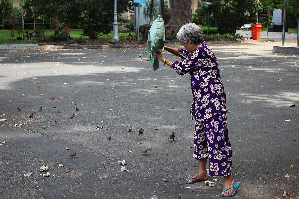 Bà Mai đang thả dế mua ở chợ cho đàn chim sẻ, chim sáo trong sân Sở Thú. Ảnh: Diệp Phan.