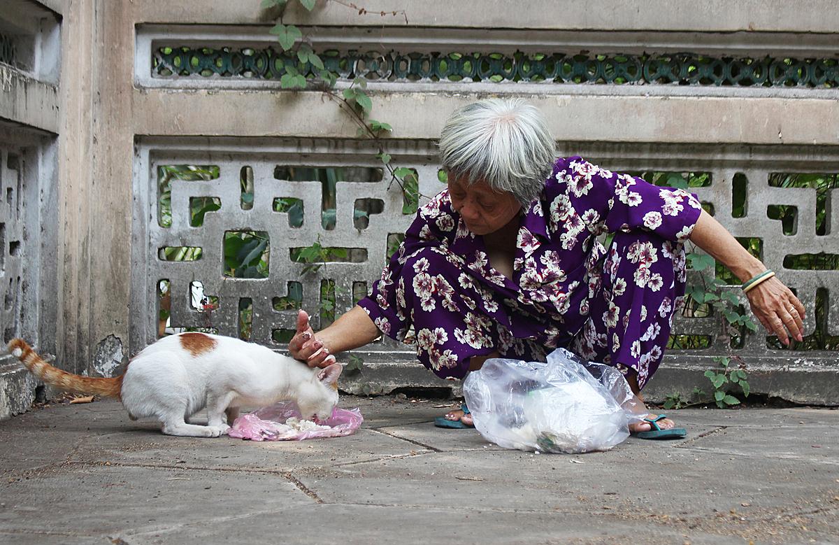 Bà Mai thường nhờ những người bạn hàng của mình bán hàng hộ để trộn thức ăn và tìm lũ mèo hoang cho ăn mỗi ngày 2 bữa. Ảnh: Diệp Phan.