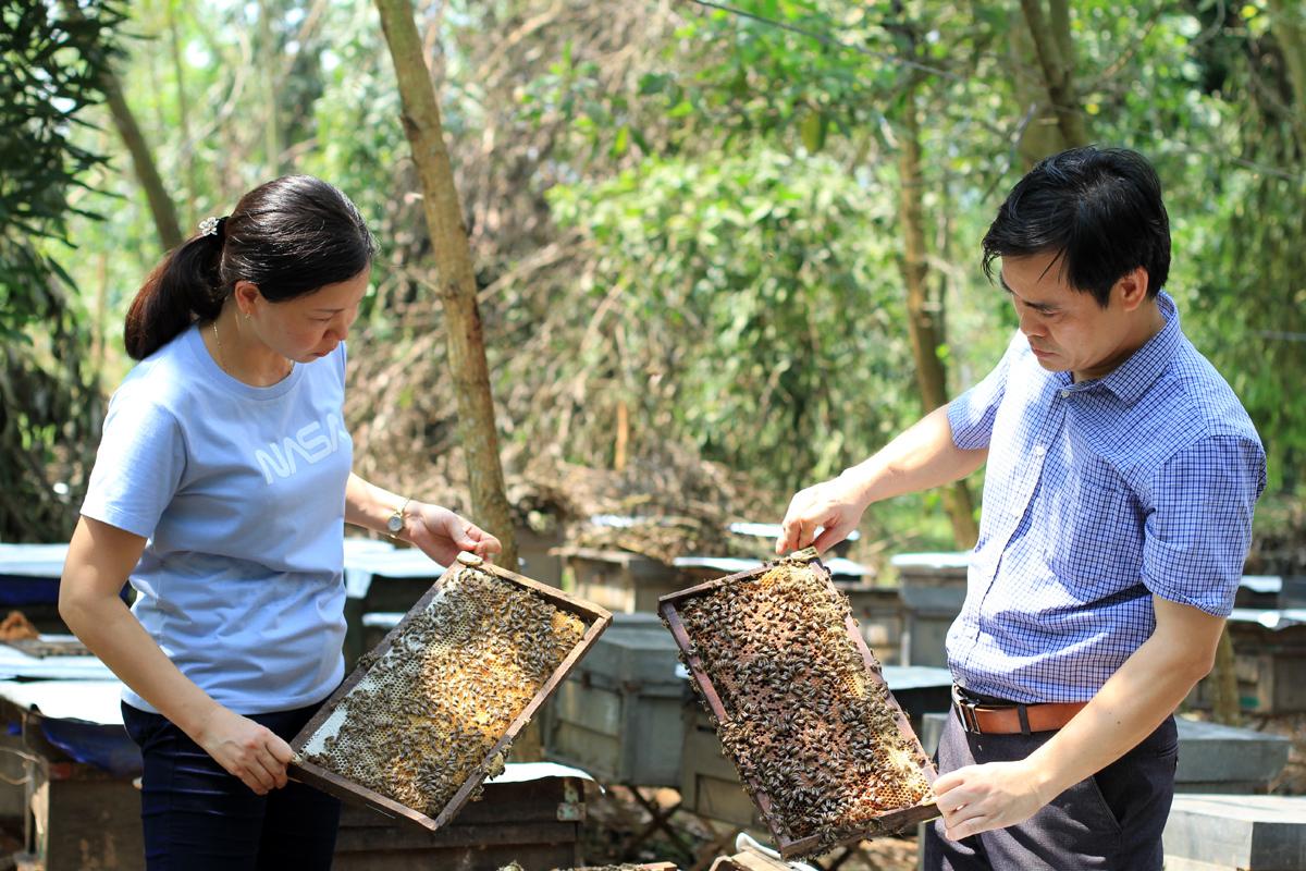 Vợ chồng chị Vinh kiểm tra cầu ong trước ngày quay mật. Cả hai đều làm nhà nước nên phải thuê người trông coi bầy ong, còn anh chị sớm tối qua thăm vườn. Ảnh: Phan Dương.
