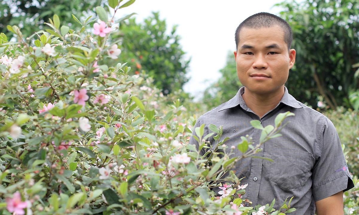 Vườn sim tại nhà của Nông Chí Khiêu có khoảng 3.000 gốc. Mỗi cây 5 tuổi này có thể cho thu hoạch 5-7 kg/vụ. Ảnh: Phan Dương.