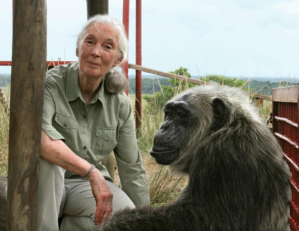 Nhà khoa học Jane Goodall trong một chuyến đi tới Congo. Ảnh:Britannica.