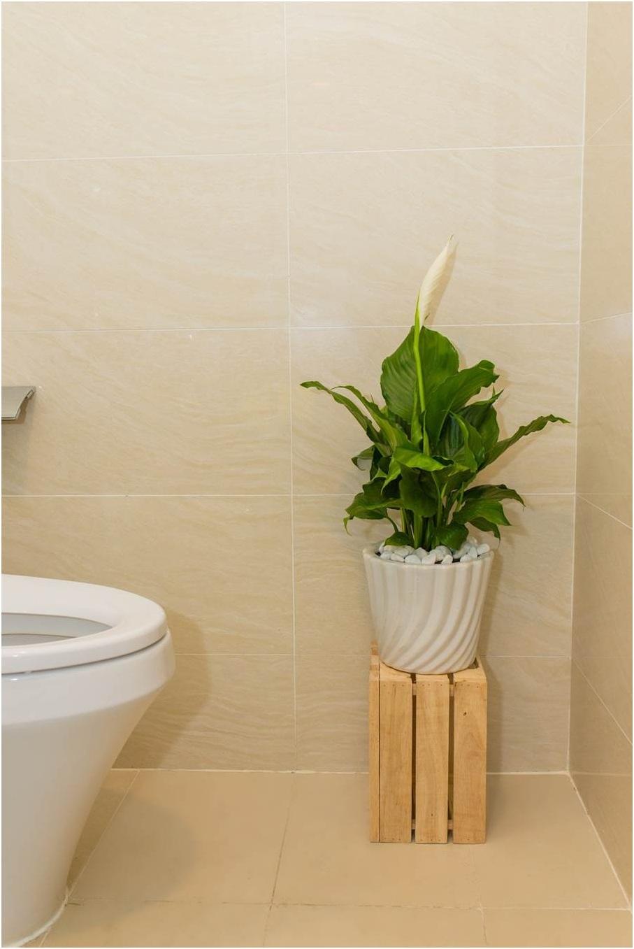 Nhờ khả năng hấp thụ ẩm mốc trong không khí, rèm tắm, thảm sàn, Lan Ý là lựa chọn hàng cho khu vực phòng tắm hay nhà vệ sinh.