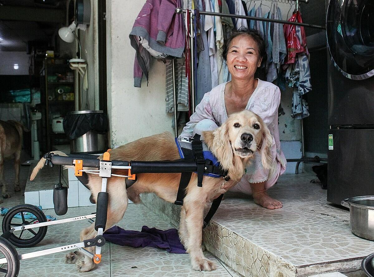 Chú chó Hero bị liệt hai chân sau được bà Thủy cho đi trên xe mỗi ngày khoảng 1 tiếng. Bà đặt tên chú chó là Hero bởi vì nó bị bệnh ký sinh trùng máu nặng, gãy xương sống nhưng đã mạnh mẽ vượt qua. Ảnh: Diệp Phan.